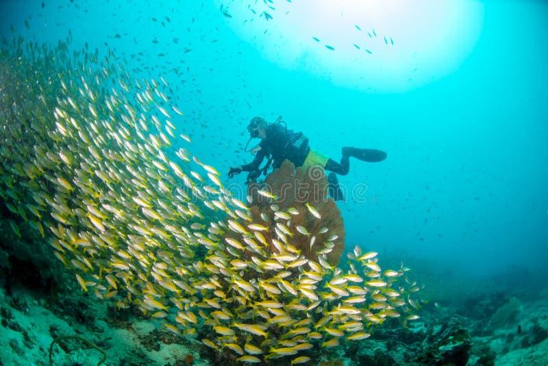 Buceadores de Scuba en el mar en Tailandia imágenes de archivo libres de regalías