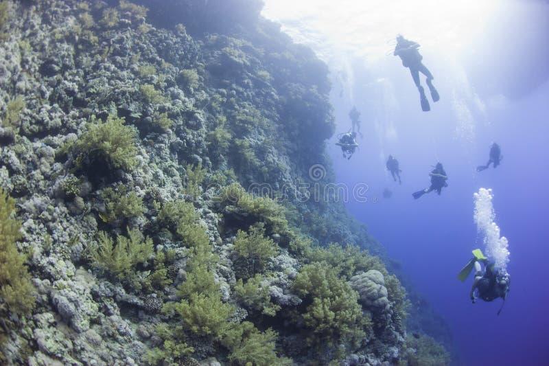 Buceadores en un arrecife de coral subacuático imagenes de archivo