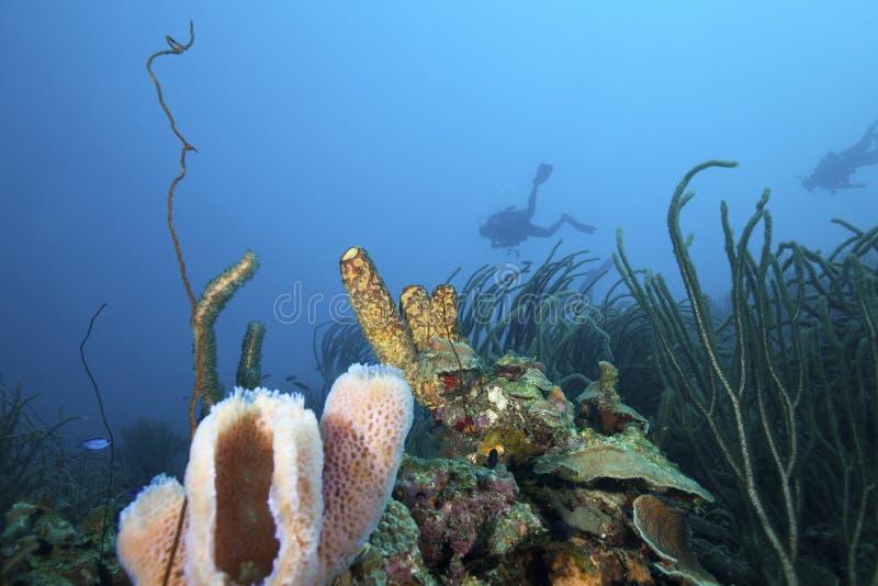 Buceadores y arrecife de coral, Bonaire foto de archivo