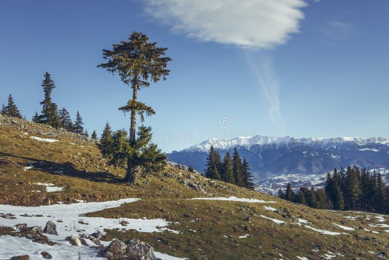 Bucegi góry widzieć od Zanoaga łąki, Piatra Craiului Natio zdjęcia stock