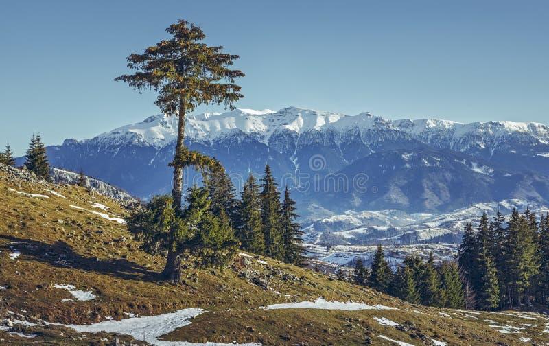 Bucegi góry widzieć od Zanoaga łąki, Piatra Craiului Natio obraz royalty free