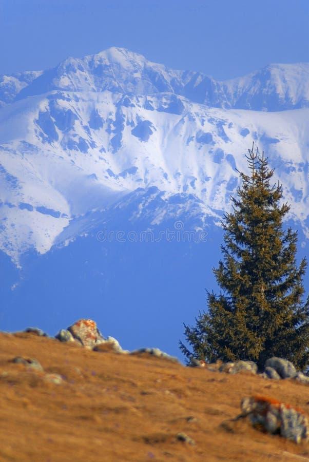 Bucegi Mountain, Romania stock photos