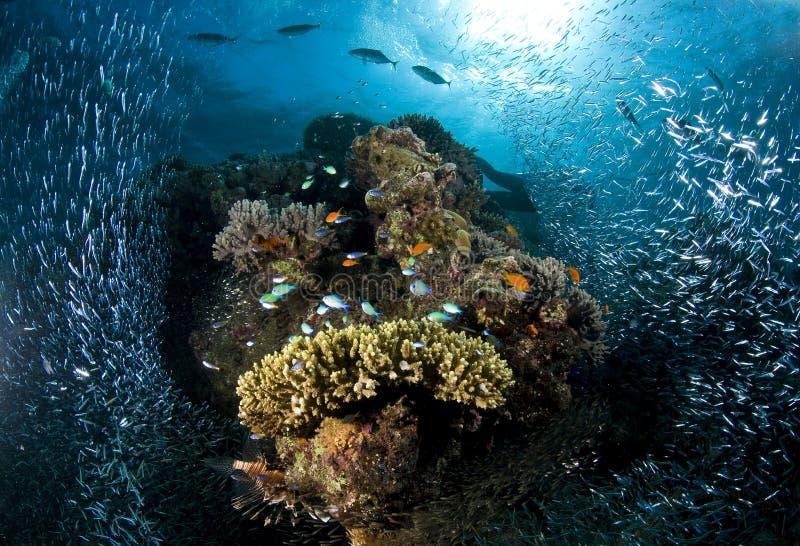Buceo con escafandra, arrecife de coral, pescado, vida marina foto de archivo libre de regalías
