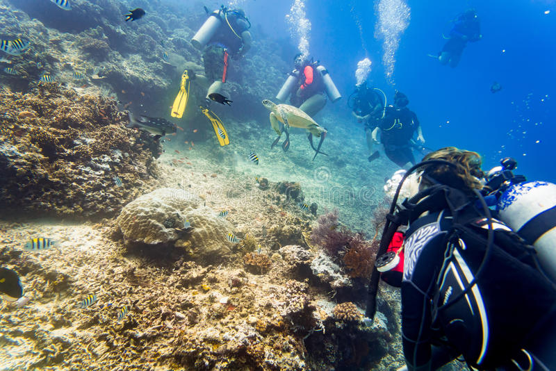 Buceo con escafandra de los buceadores que mira la tortuga y pescados de mar debajo del agua imagenes de archivo