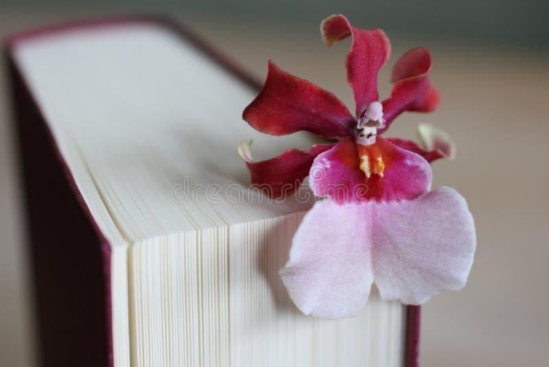 Buch mit Blume lizenzfreie stockfotos