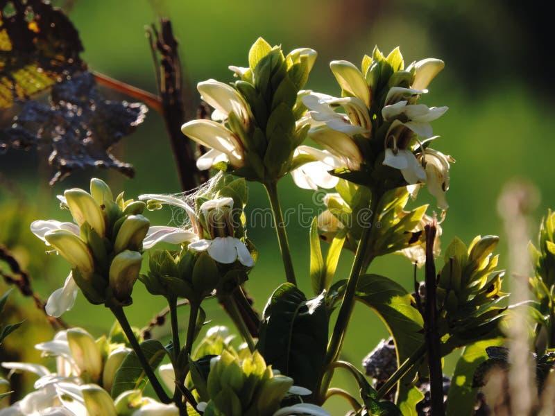 Buch von wilden Blumen lizenzfreies stockfoto