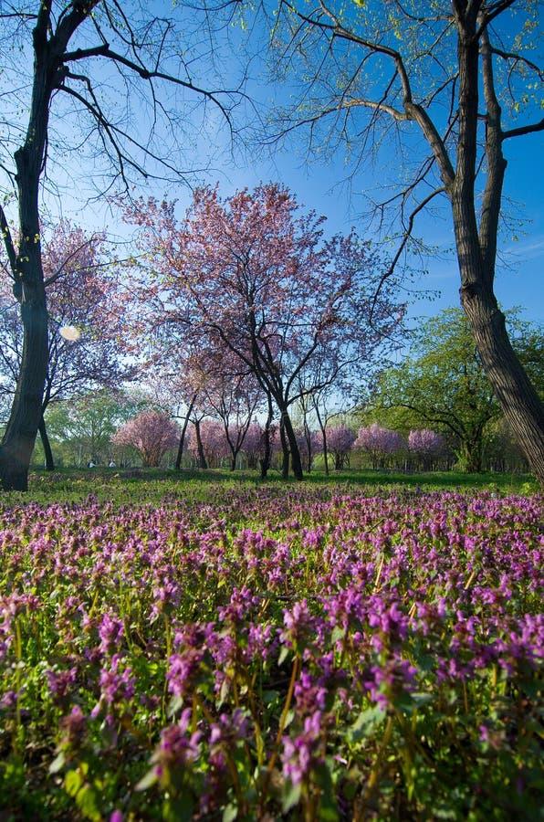 Bucharest parks and gardens - Tineretului Park stock photo