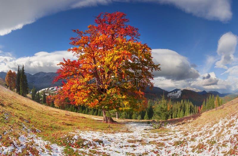 Buchenbäume im Herbst stockfoto