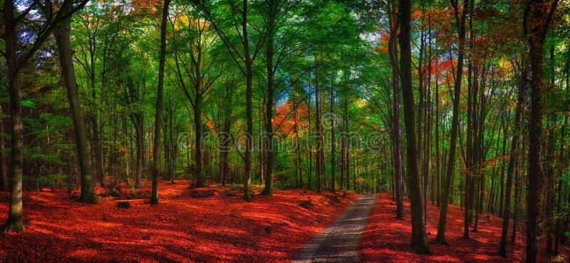 Buchenbaumwald/-waldland mit Schotterstraße am Herbstnachmittagstageslicht stockfotografie