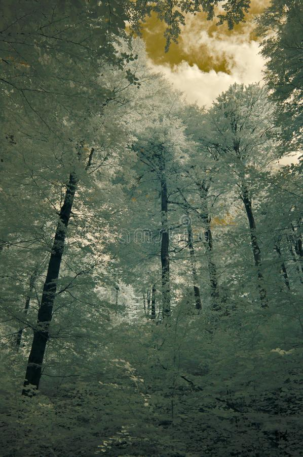 Buchenwald im Jizerske hory Mts stockfotos