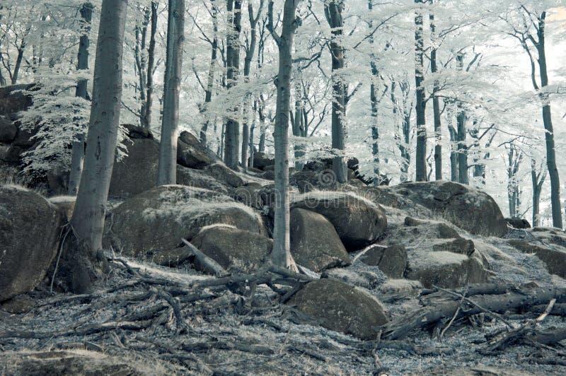 Buchenwald im Jizerske hory Mts stockfotografie