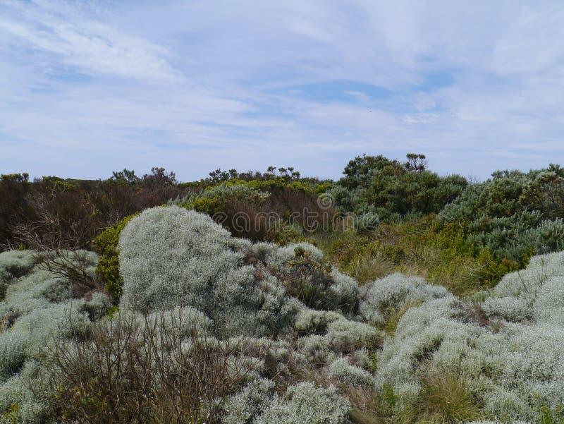 Bucht des Inselküstenparks an der australischen großen Ozeanstraße stockfoto