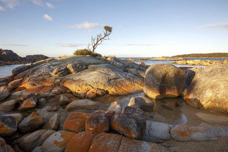 Bucht von Feuern, Australien Tasmanien stockfotos