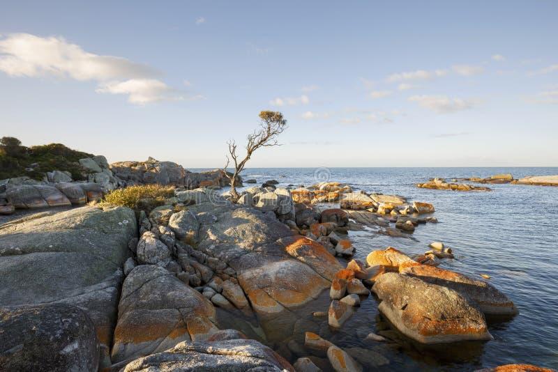 Bucht von Feuern, Australien Tasmanien lizenzfreies stockbild