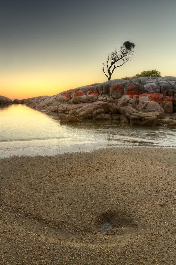 Bucht von Feuern der einzige Baum lizenzfreies stockbild