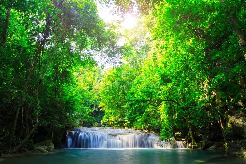 Buchtstrom des Wasserfalls grüner Wald stockfoto