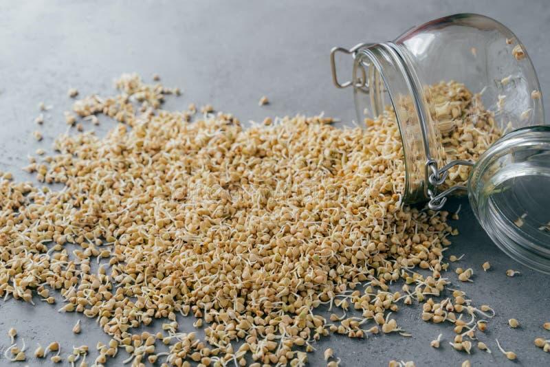 Buchweizengrützen liefen Glasgefäß über Gekeimte organische Samen Konzept der gesunden Di?t Selektiver Fokus Grüne frische Spröss lizenzfreies stockbild