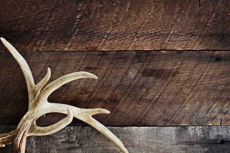 Buck Antlers över lantlig bakgrund arkivbilder