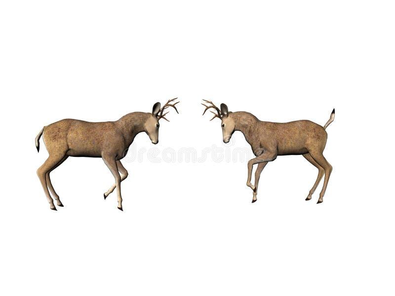 Buck Dual Royalty Free Stock Image