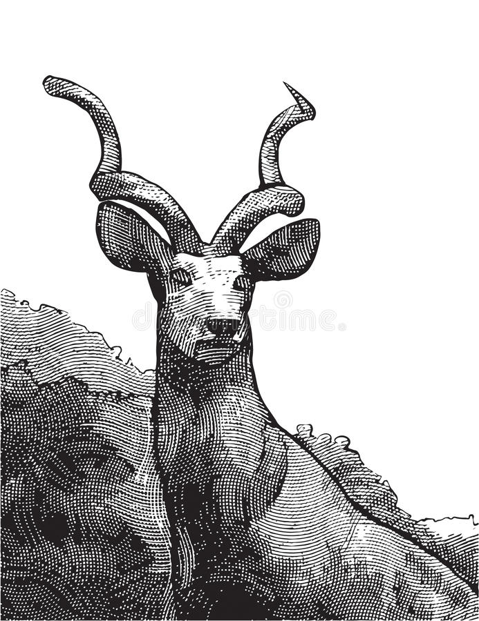 Buck Engraving. Deer stag engraving wilderness steadiness resolve nature illustration alertness vector illustration