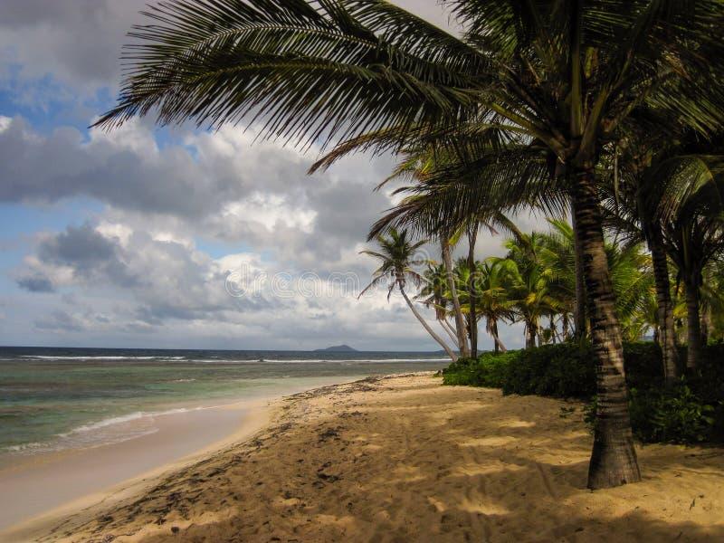 Buck Island van St Croix onder de palmen op een zandig strand royalty-vrije stock afbeeldingen