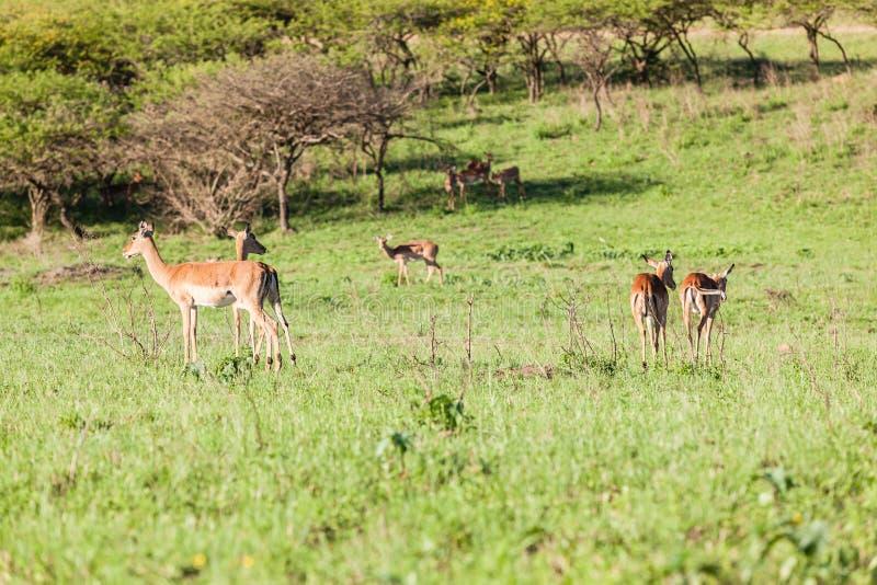 Buck Landscape Wildlife stock photos