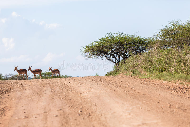 Buck Landscape Wildlife stock images