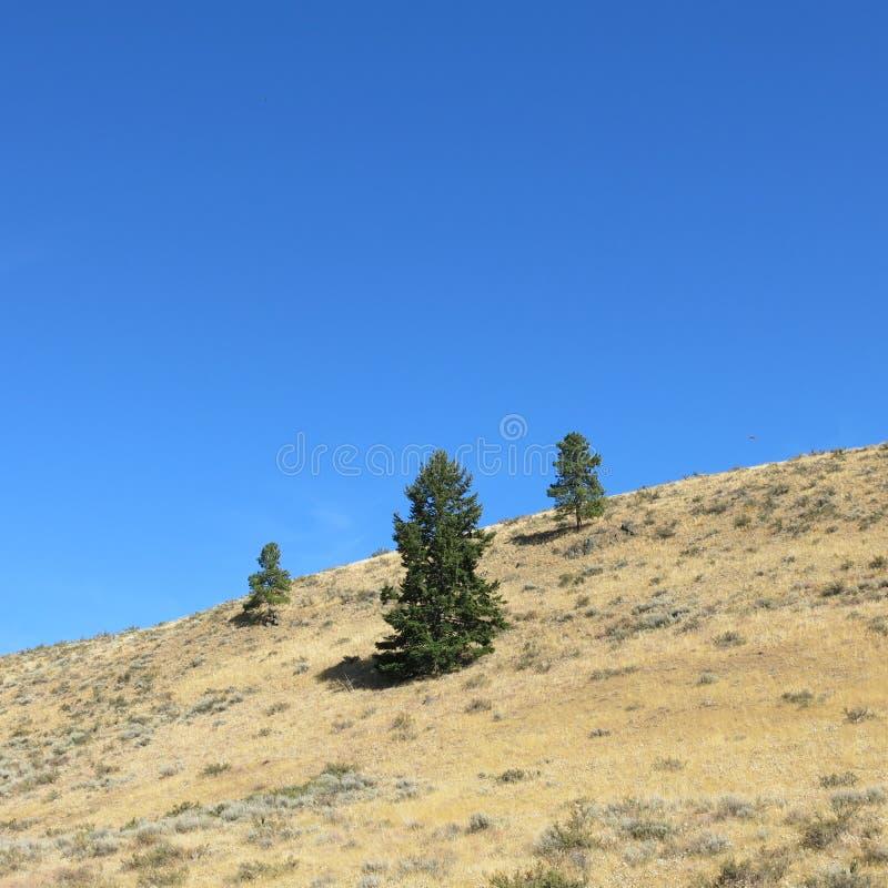 Buck Mountain slinga Winthrop WA royaltyfria bilder