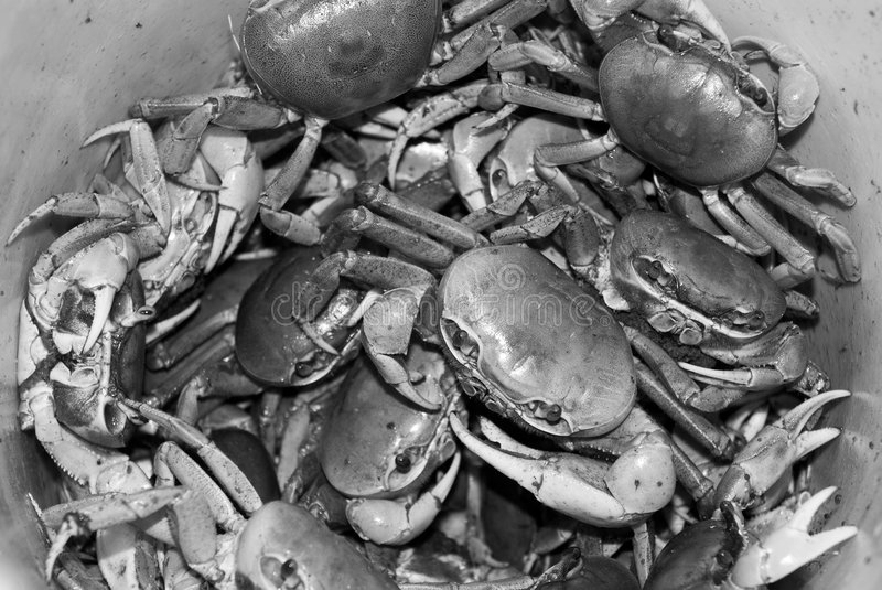 Bucket of Crabs stock images