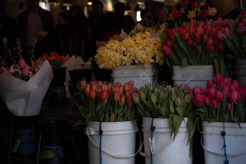 Daffodils & Tulip  buckets at Pike Market stock images