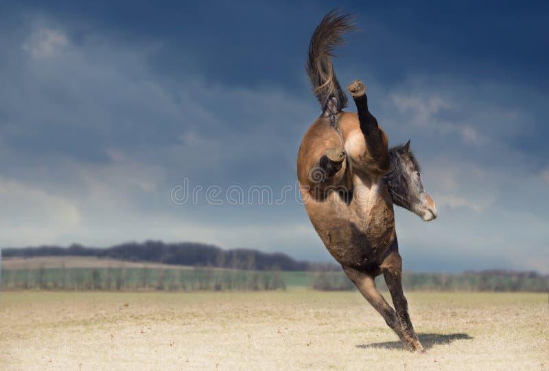 Bucking лошадь на предпосылке природы стоковое фото