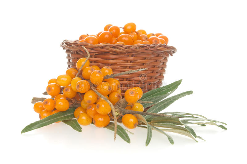 Buckthorn. Bush buckthorn, on white background stock photos