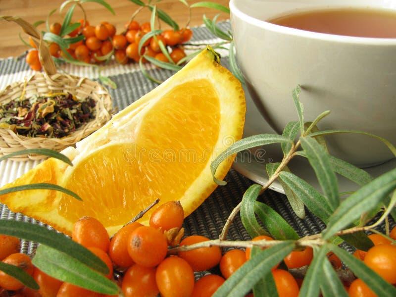 buckthorn owoc pomarańcz morza herbata obrazy royalty free