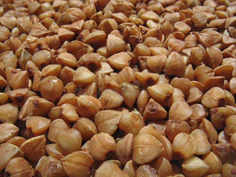 Buckwheat close up. Background stock photography