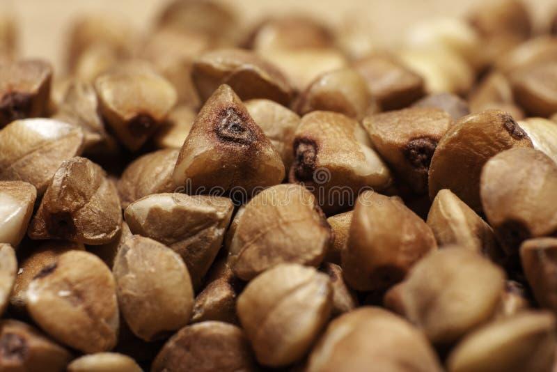 Buckwheat closeup background. fresh buckwheat. dry buckwheat texture stock photography