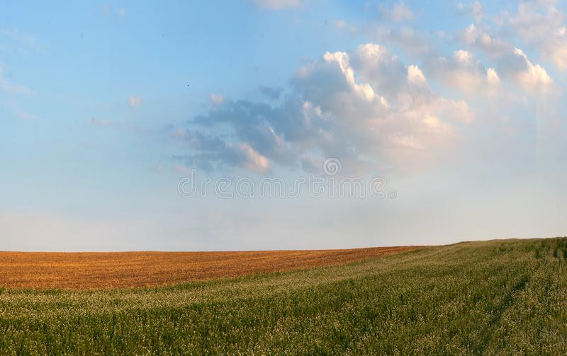Buckwheat field and straw in the evening light and cloud. Buckwheat field linesand straw in the evening light stock photo