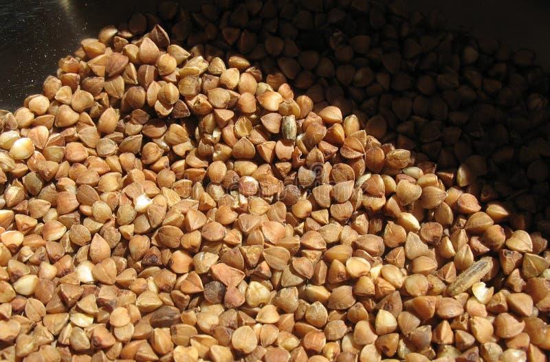 Buckwheat royalty free stock photo