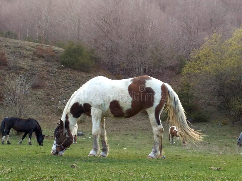 Bucolic scene of a white and brown horse. It`s a typical panorama of Italian country royalty free stock photography