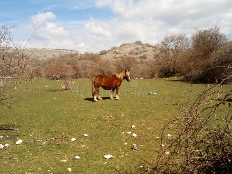 Bucolic scene of a young horse in a  mountain landscape royalty free stock photos