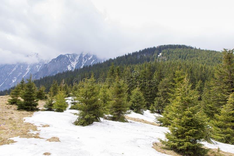 Bucsoiu. View of the Bucsoiu mountain from Carpati mountains , Romania royalty free stock image