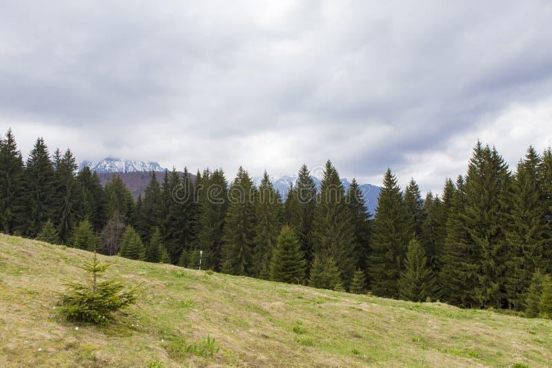 Bucsoiu. View of the Bucsoiu mountain from Carpati mountains , Romania stock photography