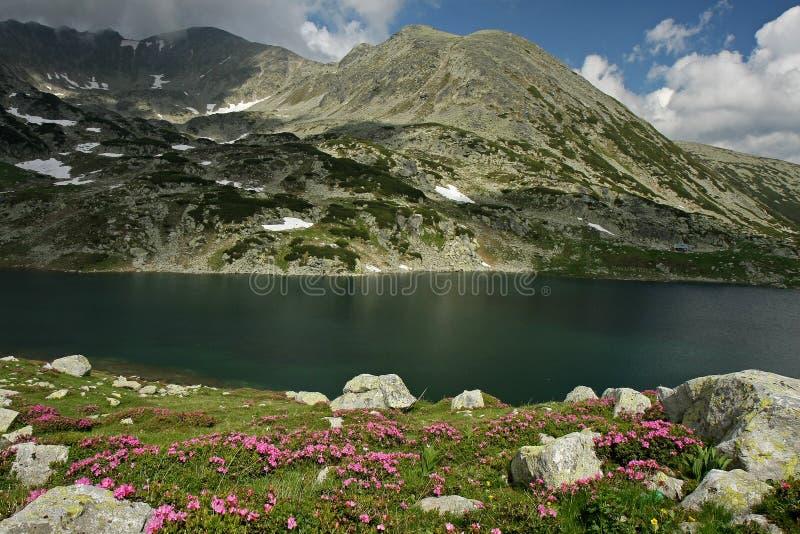 bucuraen blommar snow för juni lakelappar arkivfoton
