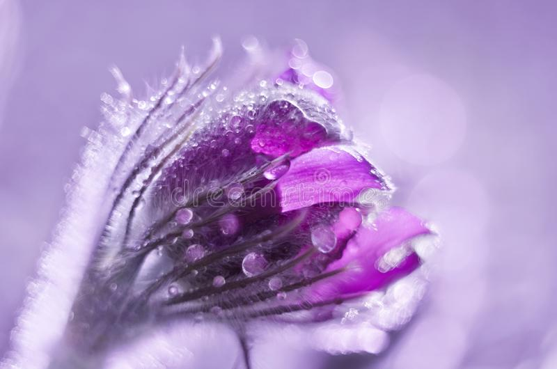 Bud of a dream-grass in drops, tinted background image stock photos