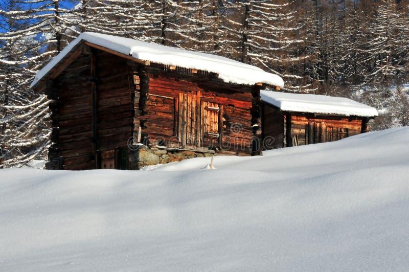 bud góry śniegu dwa zima obrazy royalty free