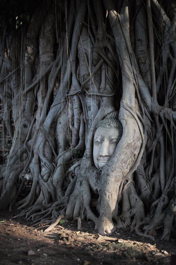 Buda antiguo en raíces del árbol fotografía de archivo libre de regalías