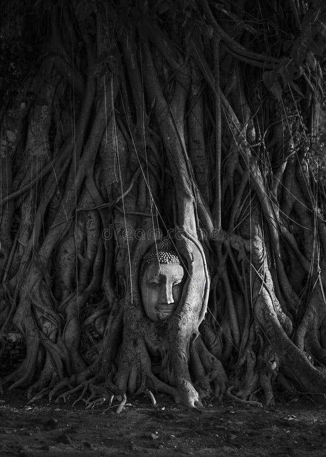 Buda antiguo en raíces del árbol imagen de archivo libre de regalías