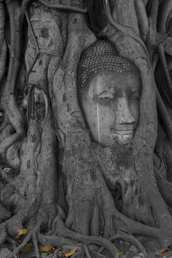 Buda coberto de vegetação por raizes da árvore foto de stock