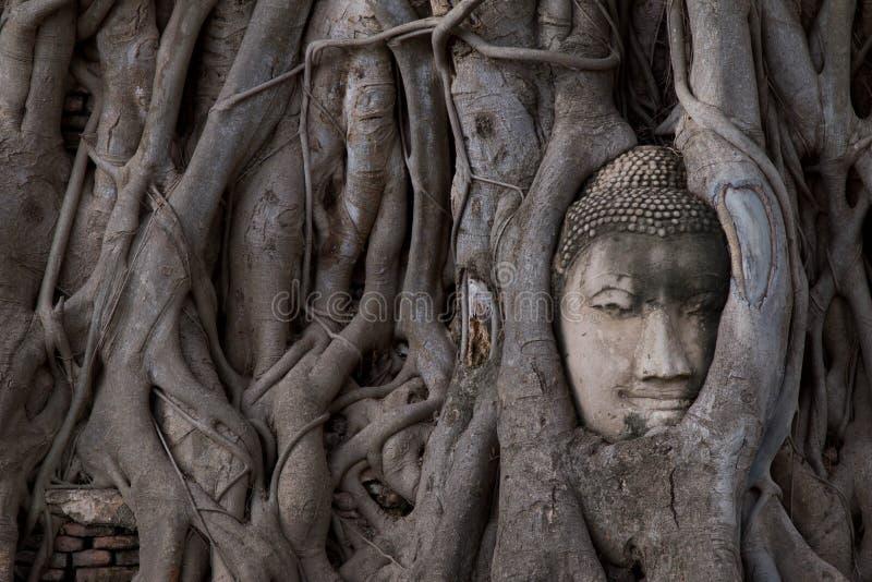 Buda dirige la estatua atrapada en raíces del árbol de Bodhi en Wat Mahathat, parque histórico de Ayutthaya, Tailandia fotos de archivo