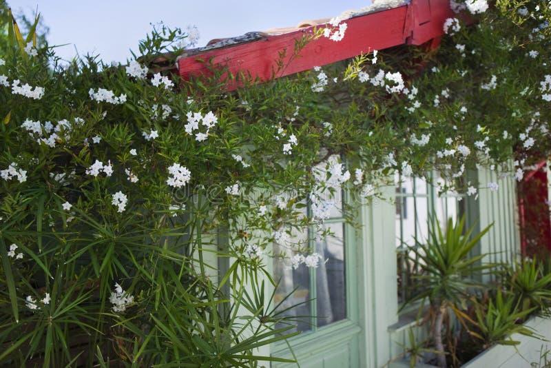 Buda i rośliny obraz stock
