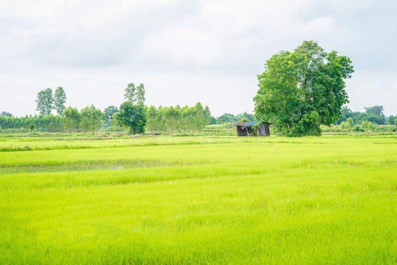 Buda w zielonym polu obraz stock